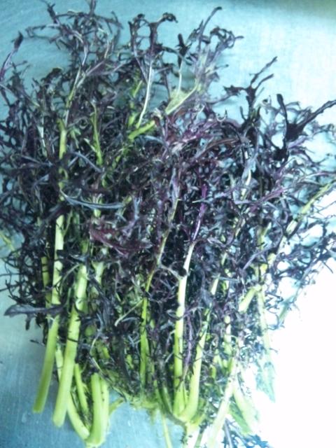無農薬野菜赤からし菜イタリアンワイナ名古屋市名東区高針