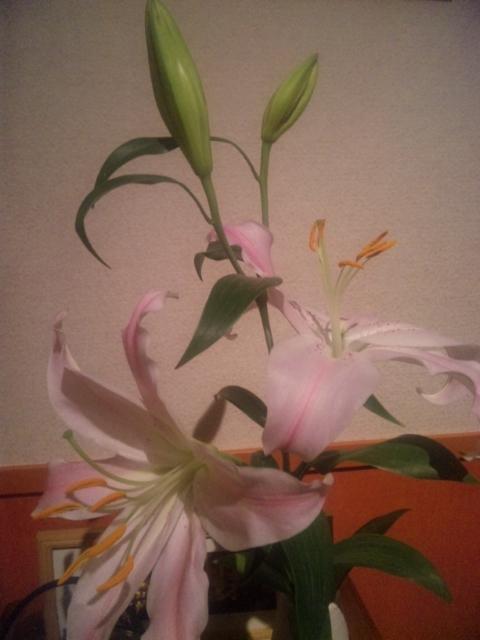 花イタリア料理    Waina    <br />  名古屋市名東区高針