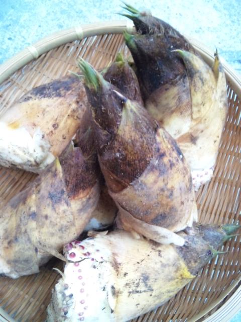 筍(たけのこ)    イタリア料理    Waina    <br />  名古屋市名東区高針