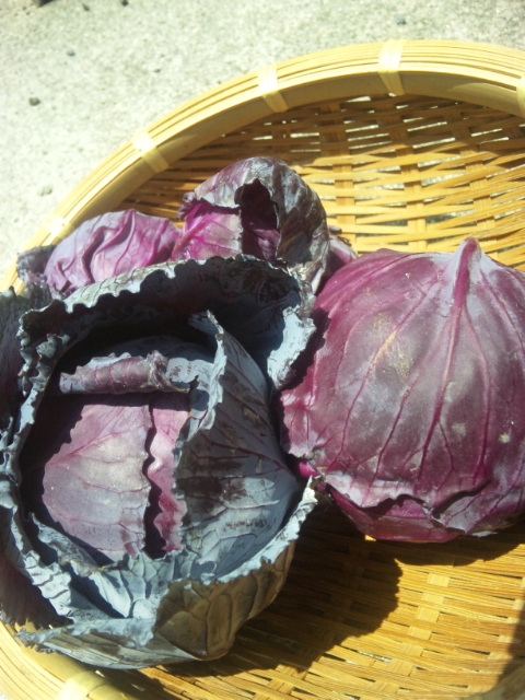 無農薬野菜イタリア料理ディナー    Waina   <br />   名古屋市名東区高針