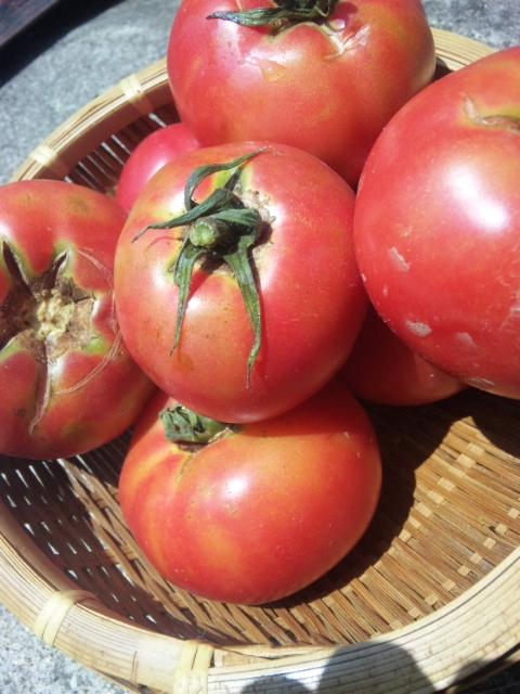 無農薬野菜イタリア料理ディナー    Waina   <br />   名古屋市近郊日進市香久山