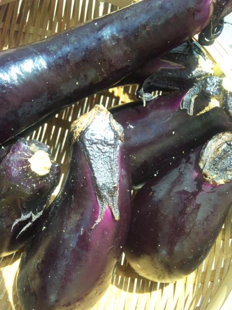 無農薬野菜イタリア料理ランチ    Waina    <br />  名古屋市名東区高針