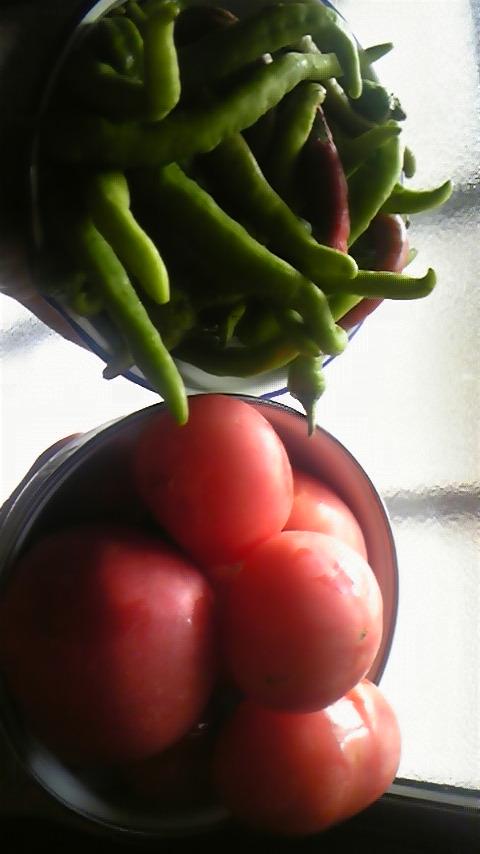 夏野菜イタリア料理Waina