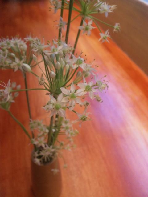花イタリアンわいな名古屋市名東区高針